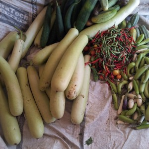 Vegetable Production at Home