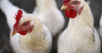 WHO Warns World to Reduce Antibiotics in Livestock