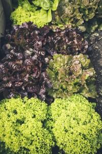 fresh bio leaf salad raised bed