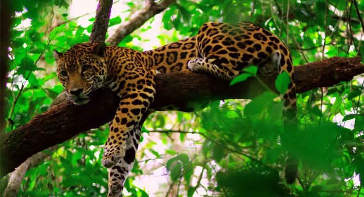 Belize – Central Americas Marine Paradise