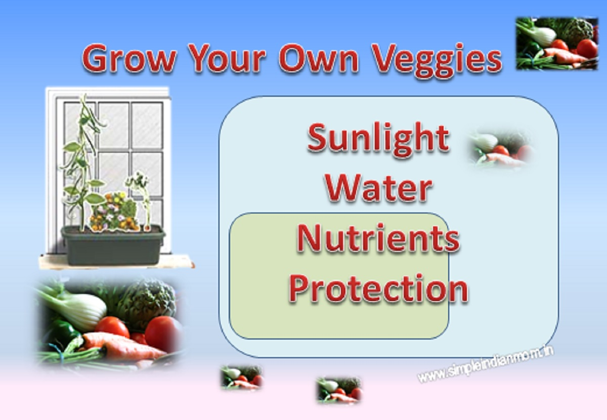 Grow Your Own Organic Veggies