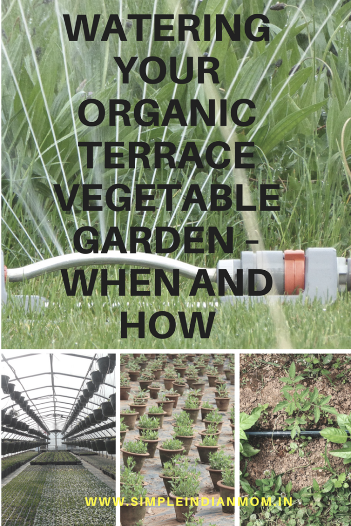 Watering your organic terrace vegetable garden when and for Terrace garden meaning