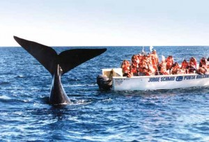 arg-eng-eb-whale-watching-in-puerto-madryn