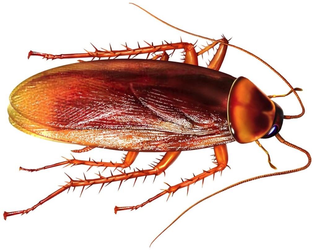 cockroach1-1024x810