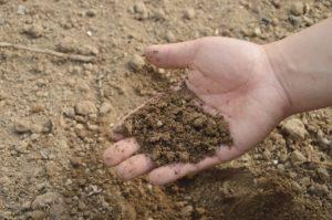 Easy Soil Test